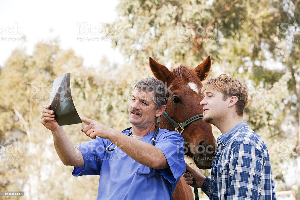 Vet discussing X-ray with horse owner stock photo