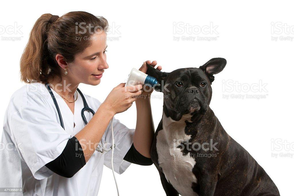 Vet examining a Crossbreed dog with an otoscope royalty-free stock photo