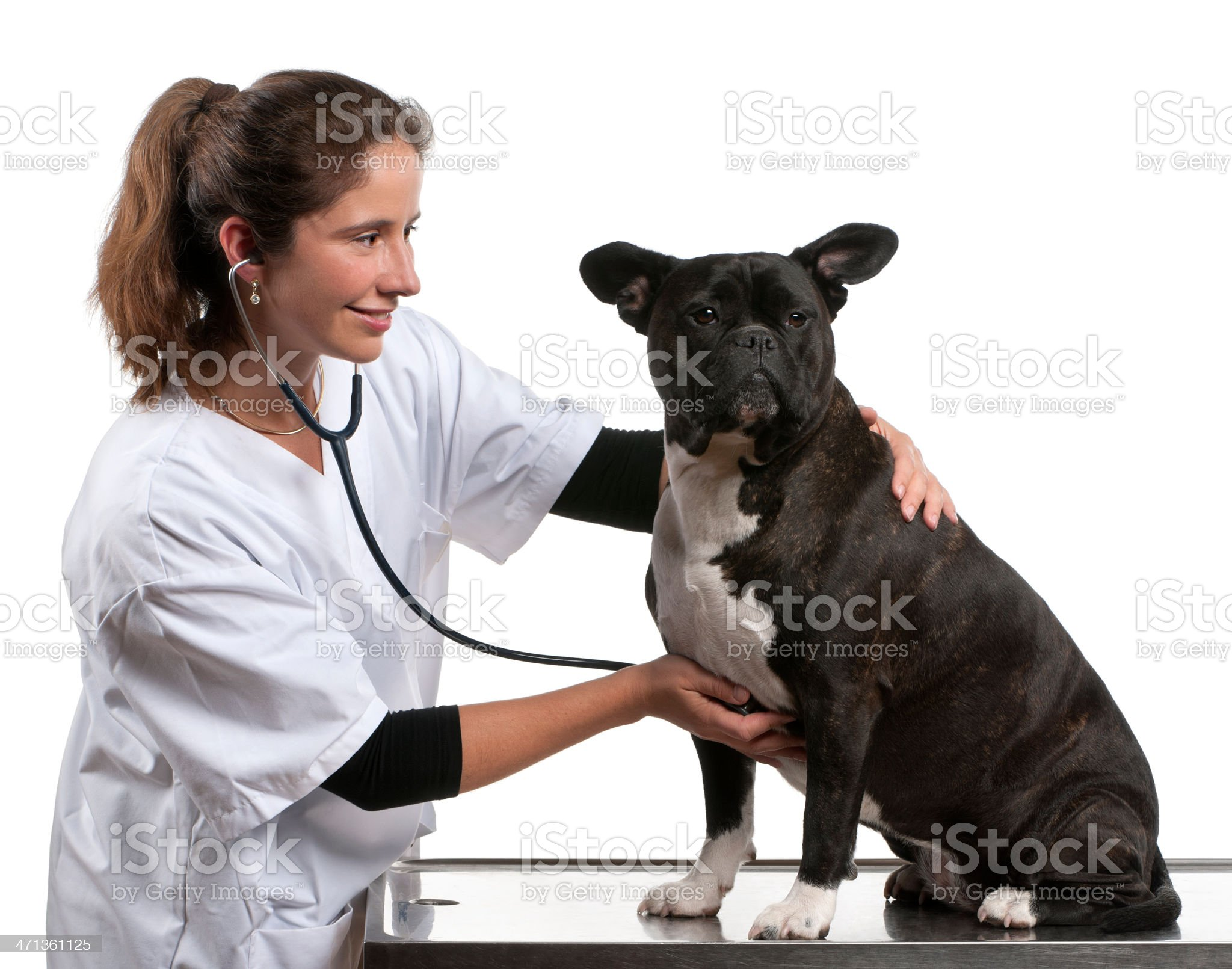 Vet examining a Crossbreed dog with stethoscope royalty-free stock photo