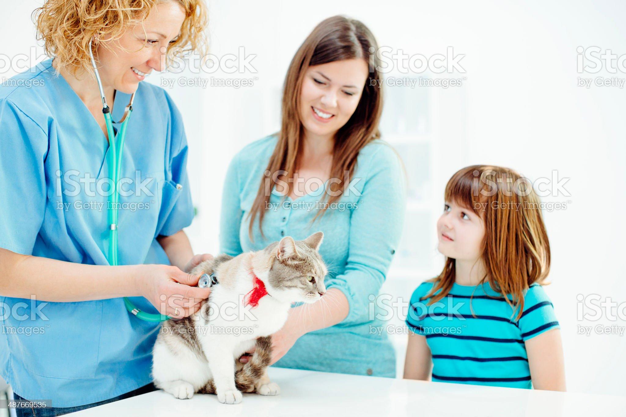 Vet examining little girls cat. royalty-free stock photo