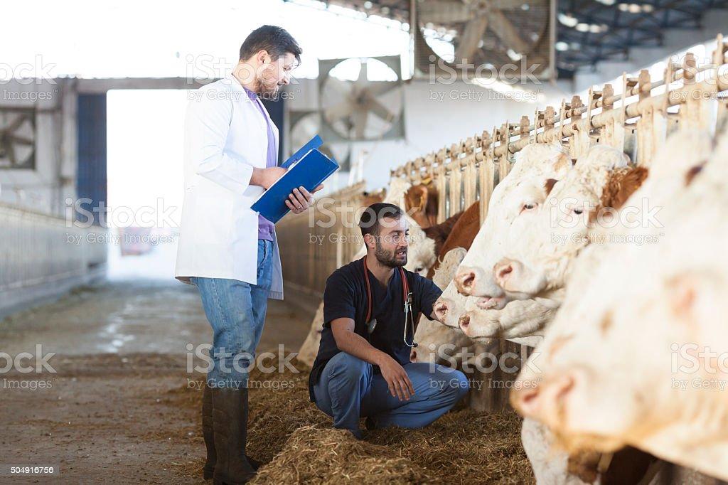 Vet In The Farm stock photo