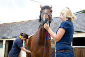 Vet listening to horse's heart while woman holds horse still
