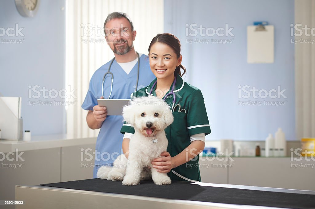 vet nurse and vet stock photo