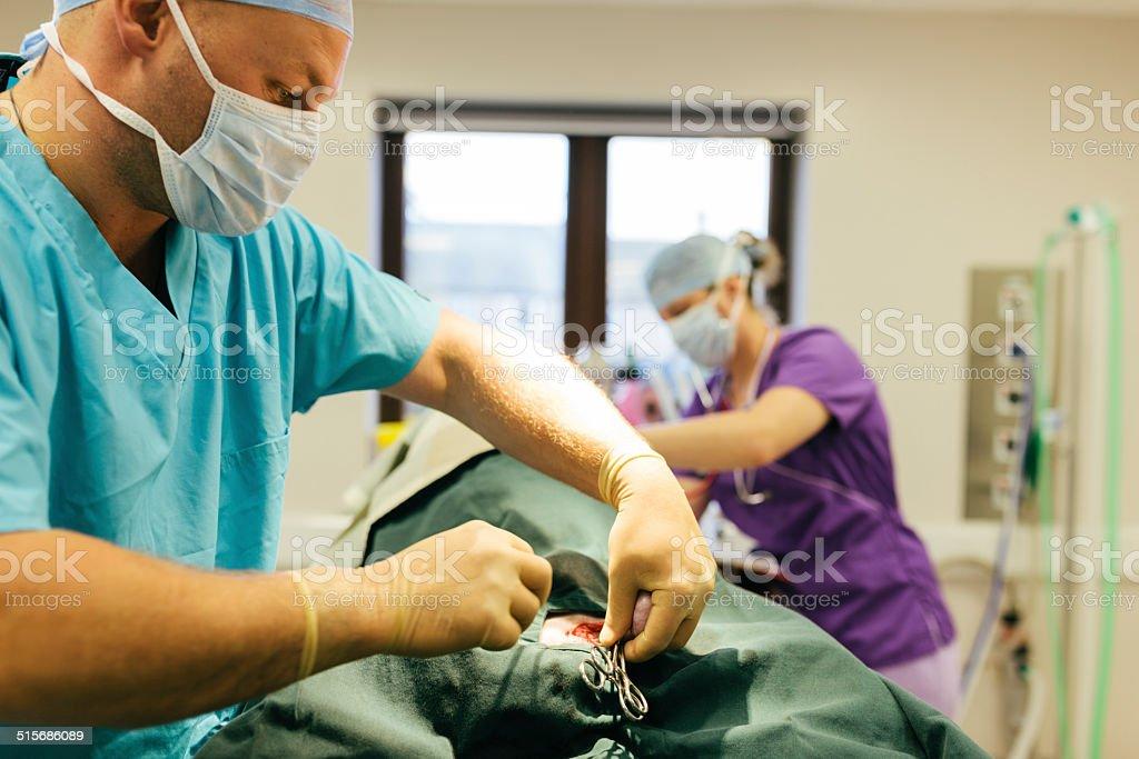 Vet operating on dog stock photo