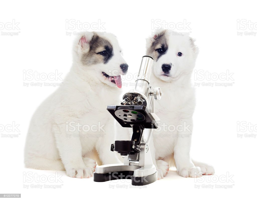 vet puppy on a white background stock photo