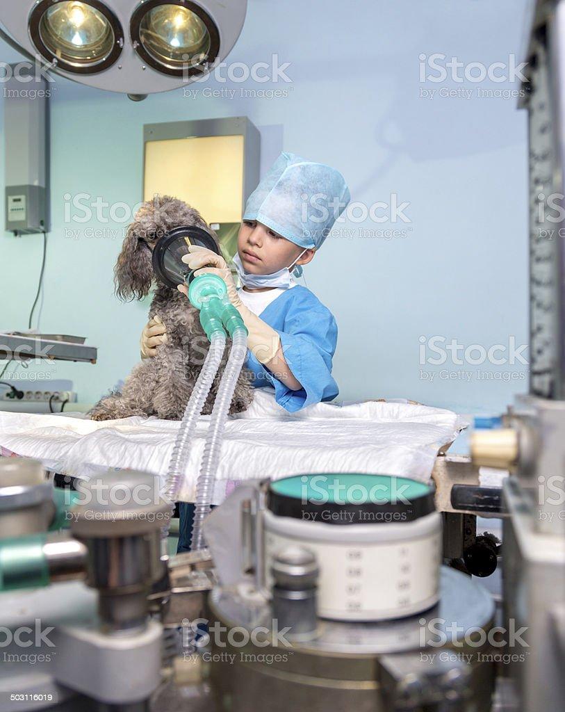 Vet surgery preparation stock photo
