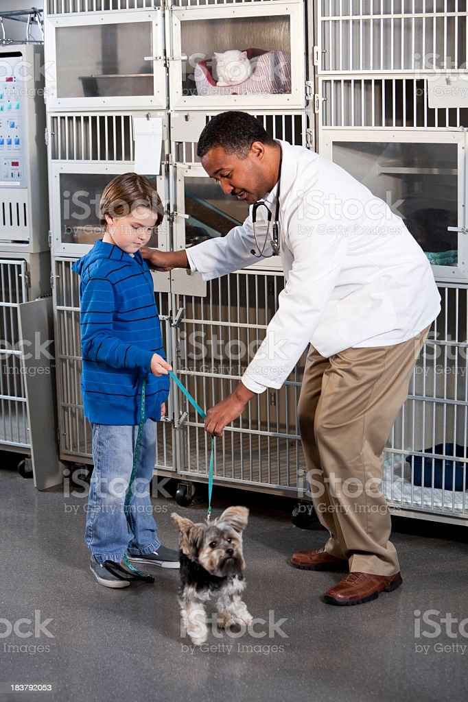 Vet with boy and dog in animal clinic stock photo