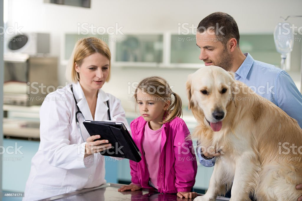 Vet With Dog And Owner stock photo