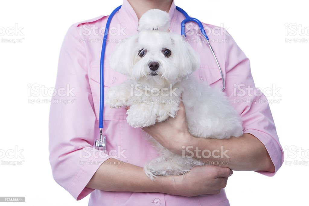 Vet with dog royalty-free stock photo