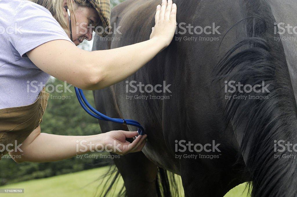 Vet with pony royalty-free stock photo