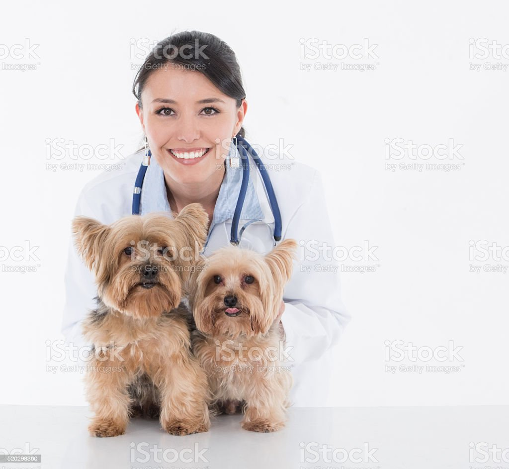 Vet with two little dogs stock photo