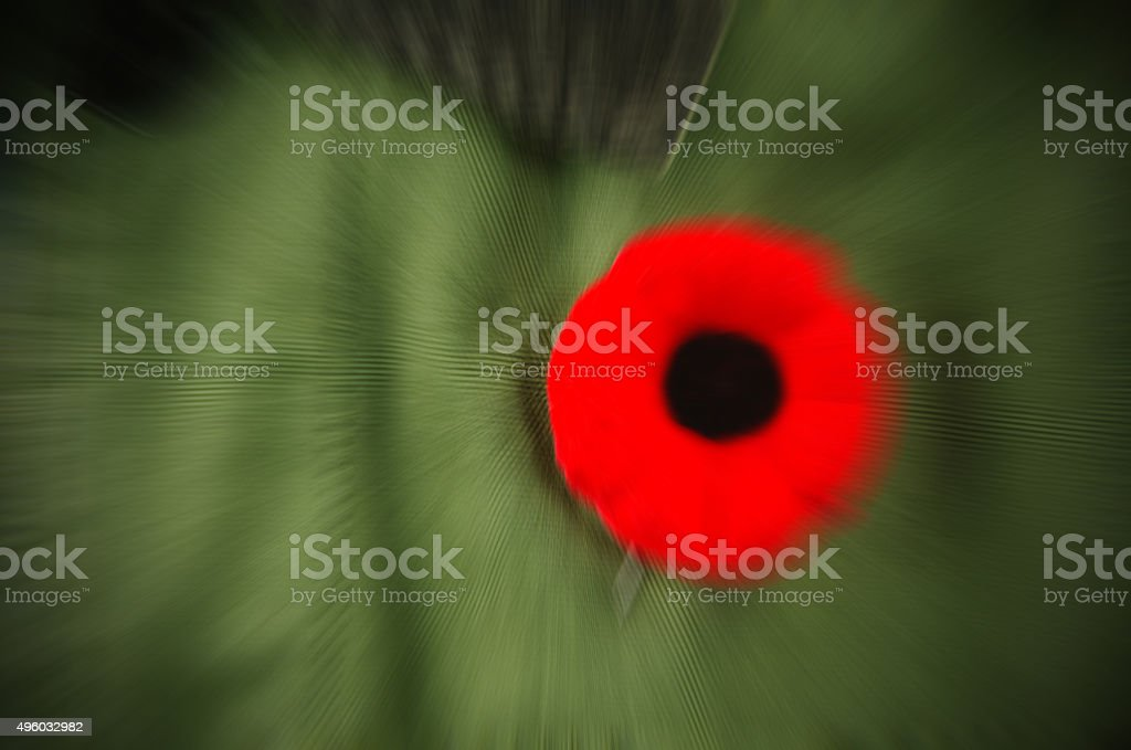 Veterans' Day and Remebrance Day Poppy with Zoom Applied stock photo