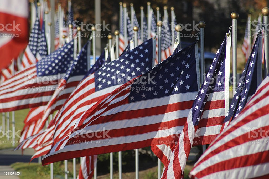 Veteran's Day Flags royalty-free stock photo