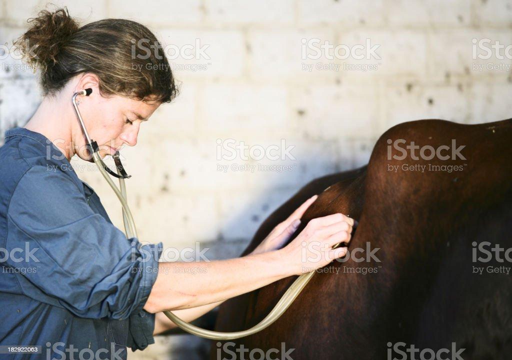 Veterinarian at work stock photo