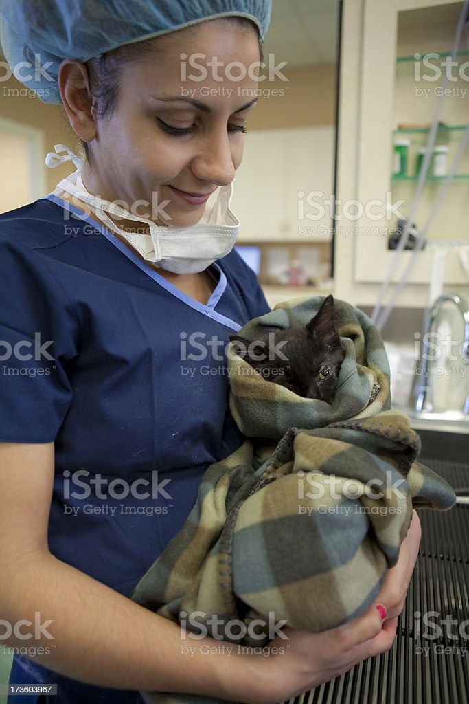 Veterinarian Cares for Cat After Successful Surgery royalty-free stock photo