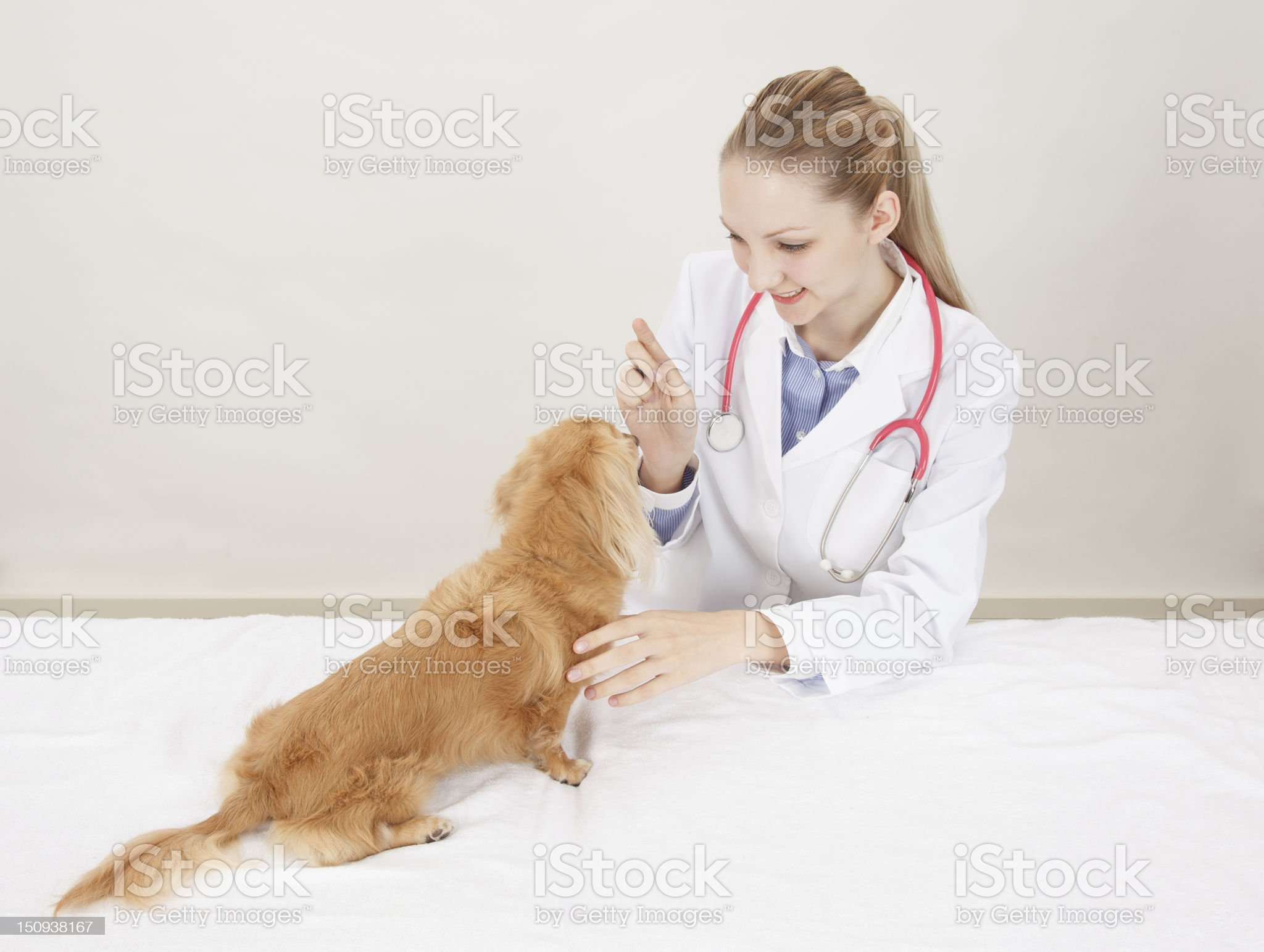 Veterinarian doctor royalty-free stock photo