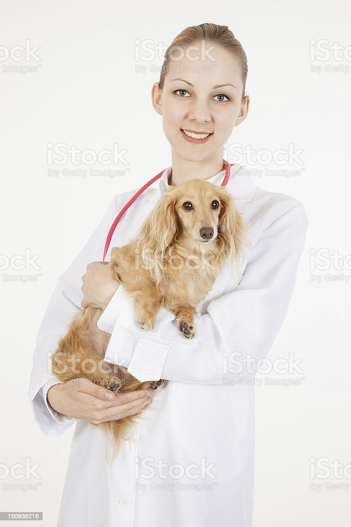 Veterinarian doctor royalty-free stock photo