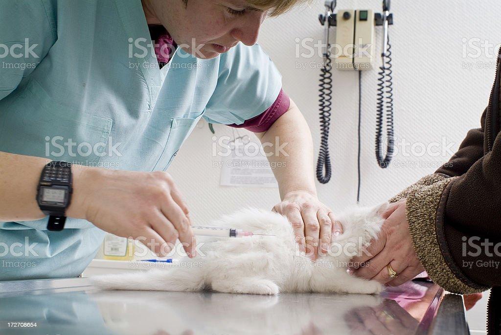 Veterinarian Doctor Series royalty-free stock photo