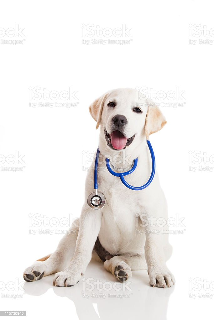Veterinarian dog stock photo