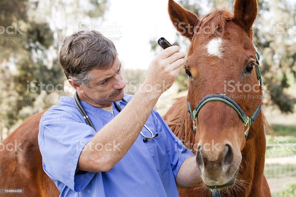 Veterinarian during medical exam of a horse stock photo