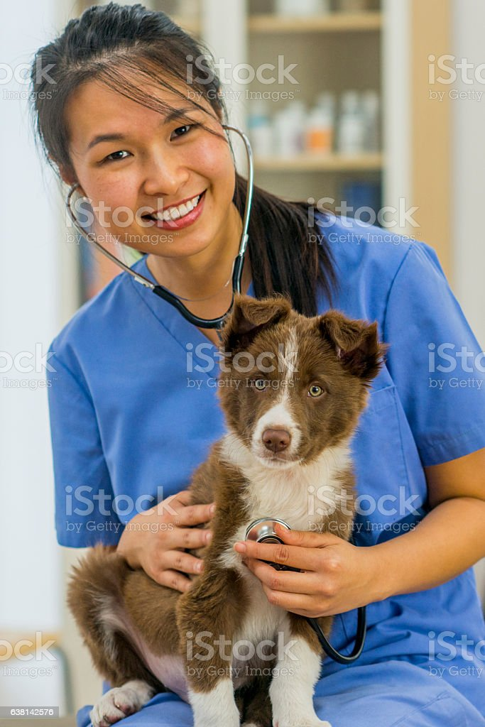Veterinarian Enjoying stock photo