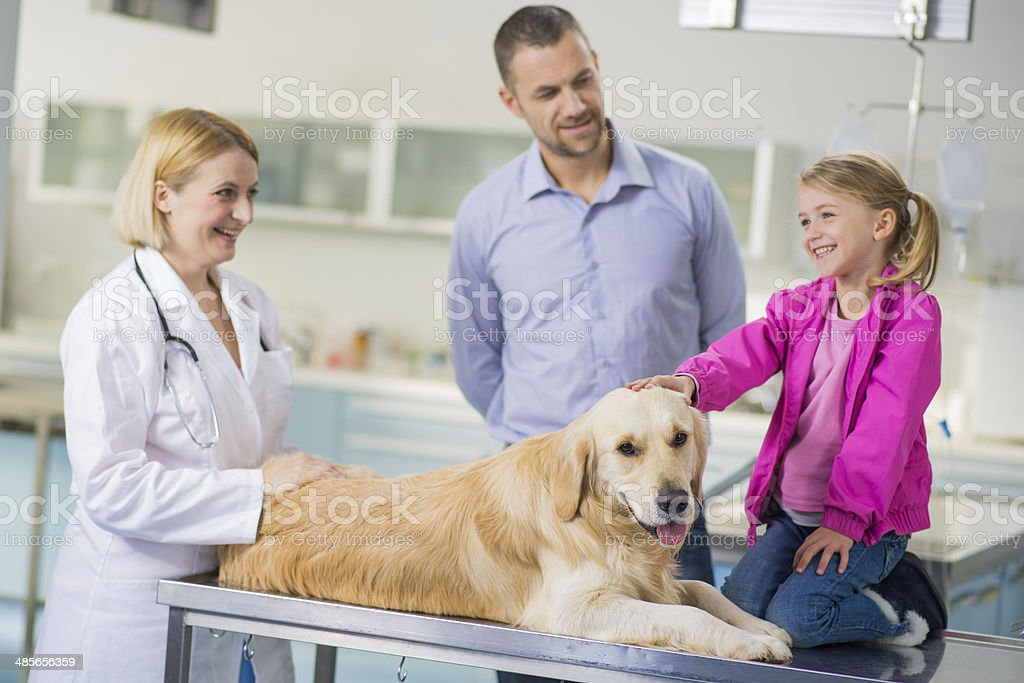 Veterinarian Examining A Family Dog royalty-free stock photo