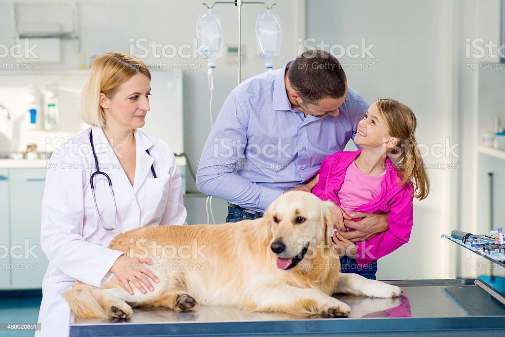 Veterinarian Examining A Family Dog royalty-free stock photo
