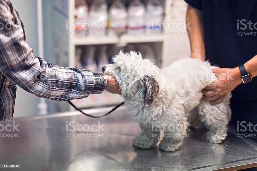 Veterinarian examining dog stock photo