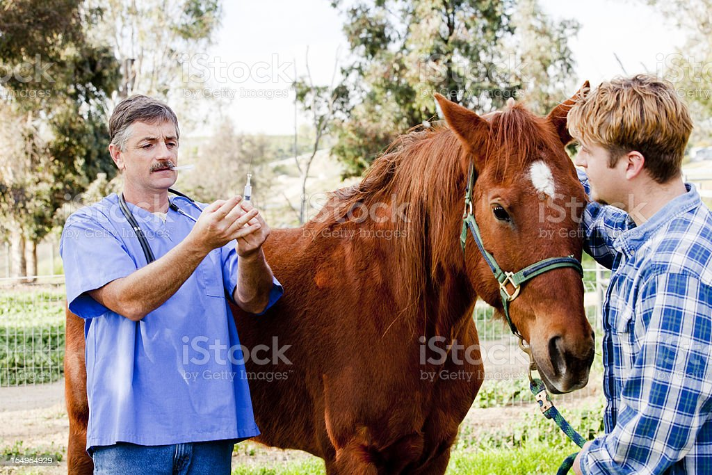 Veterinarian getting ready to give horse injection stock photo