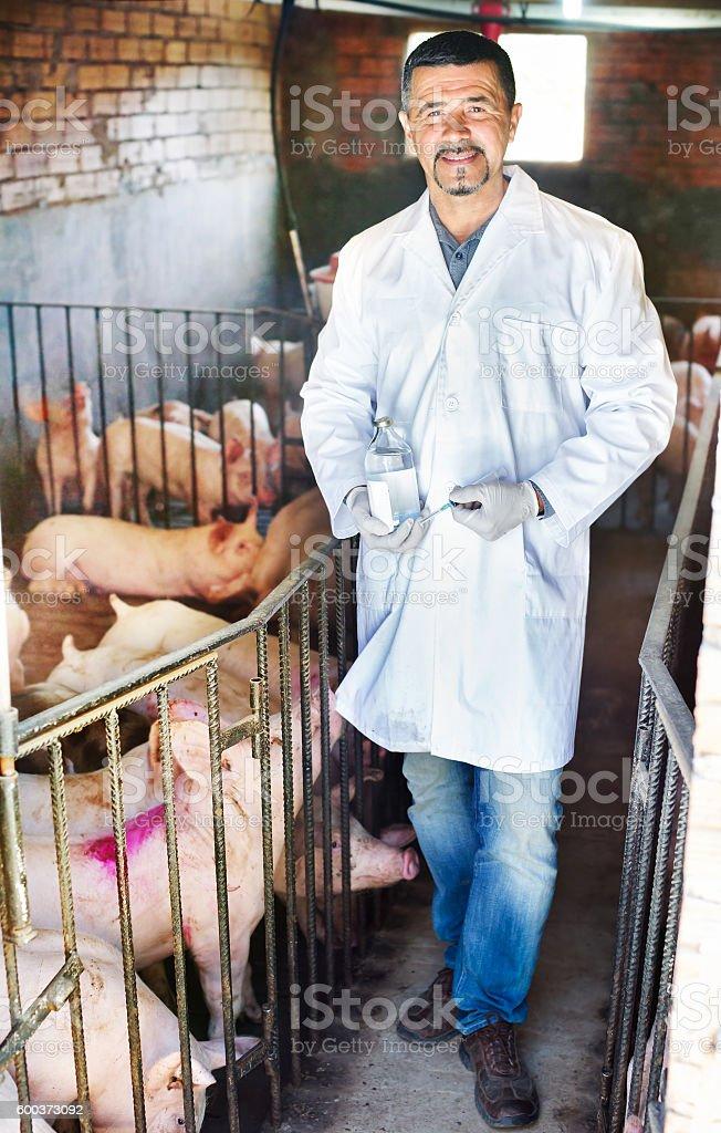 Veterinarian in pigsty stock photo