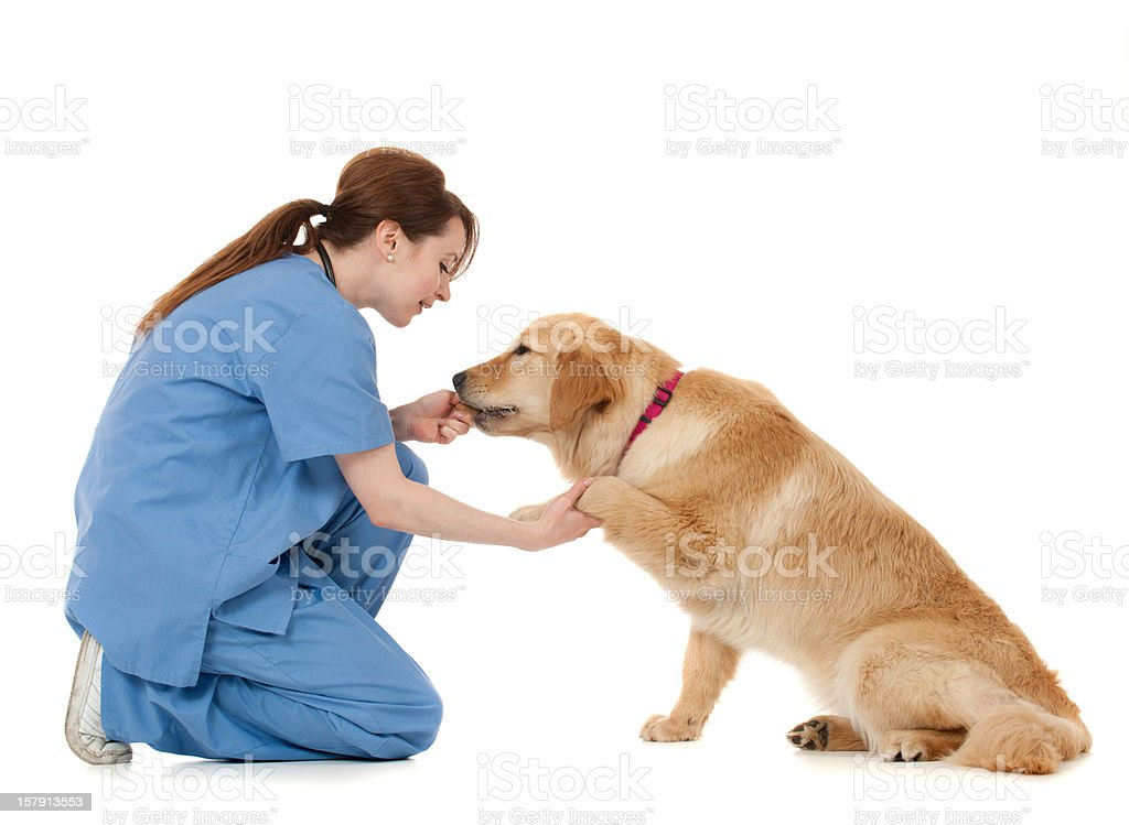 Veterinarian stock photo