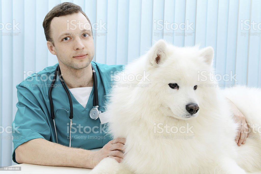 veterinarian royalty-free stock photo