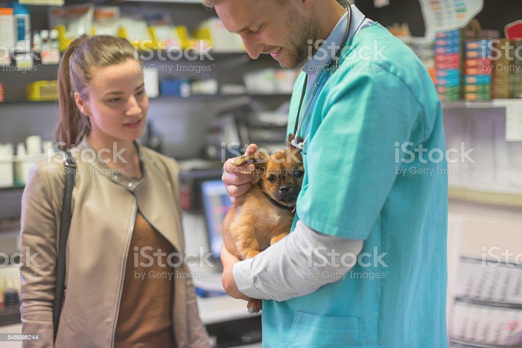 Veterinarian stroking pekingese puppy stock photo