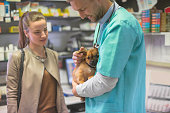 Veterinarian stroking pekingese puppy