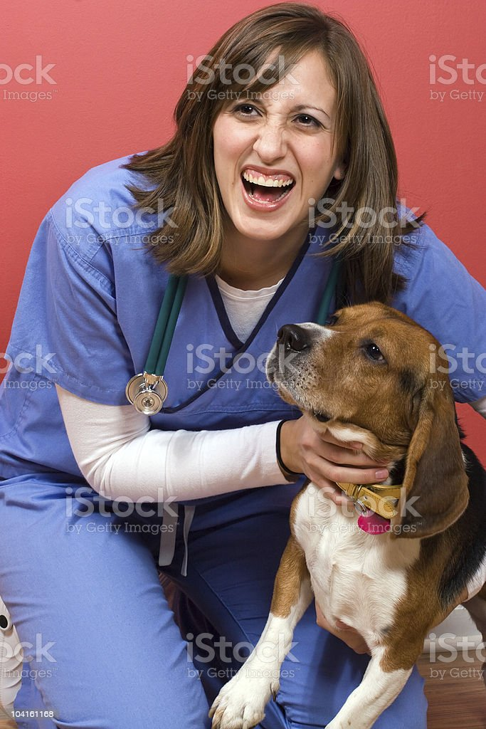 Veterinarian With a Beagle royalty-free stock photo