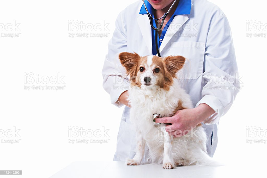 Veterinarian with Dog royalty-free stock photo