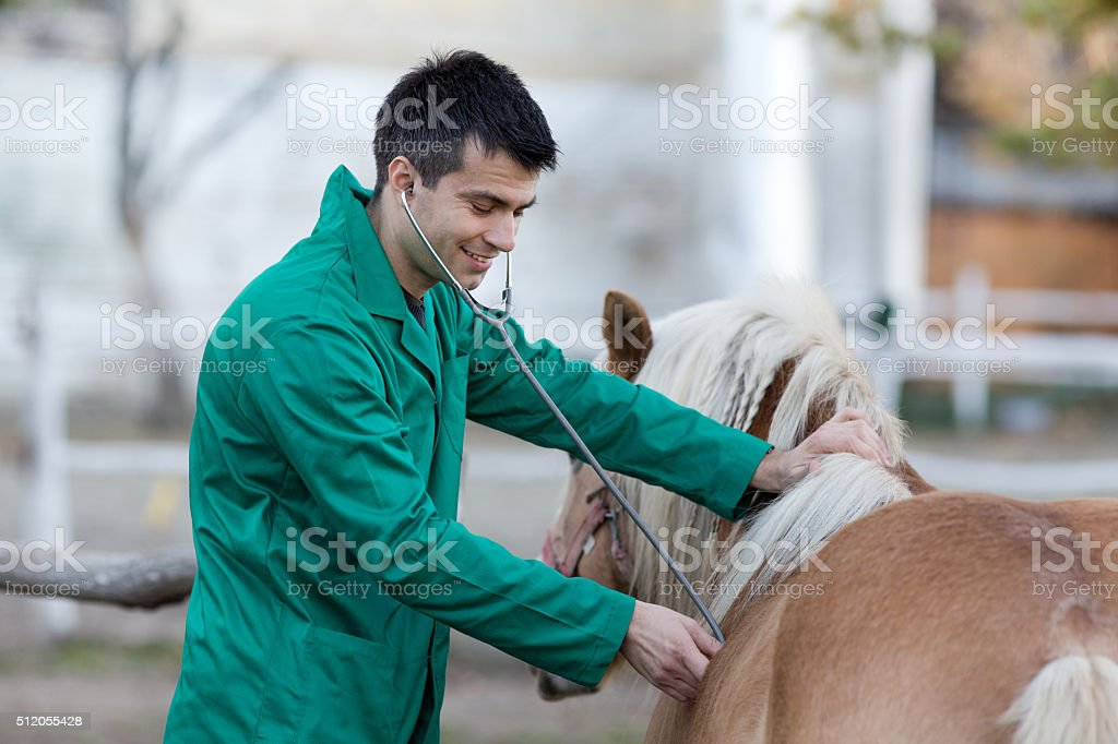 Veterinarian with pony horse stock photo