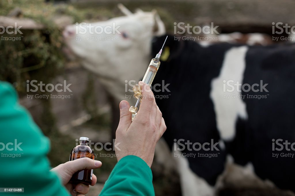Veterinarian with syringe on farm stock photo
