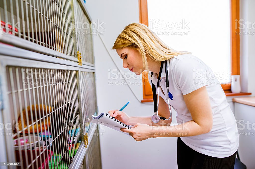 Veterinarian writing into a notepad about cats in cage stock photo