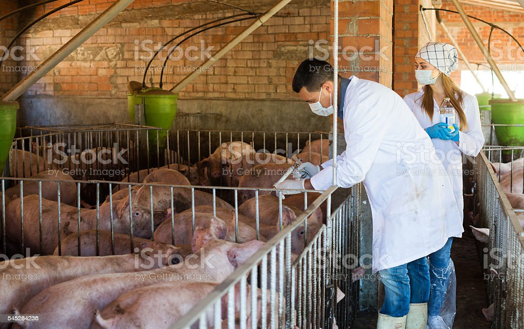 Veterinarians holding syringes and bottles stock photo