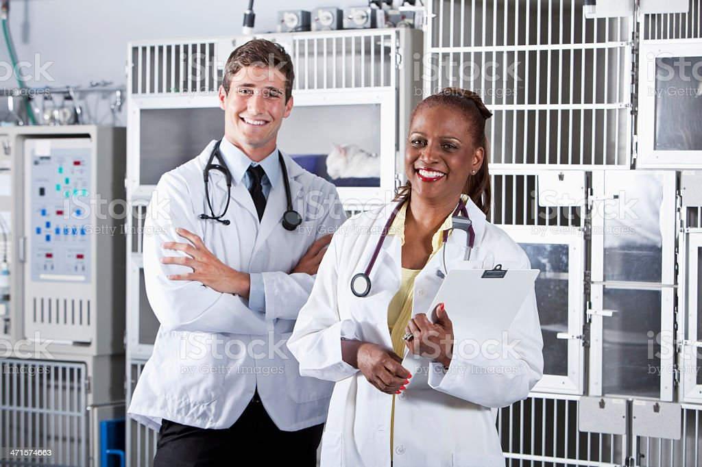 Veterinarians royalty-free stock photo