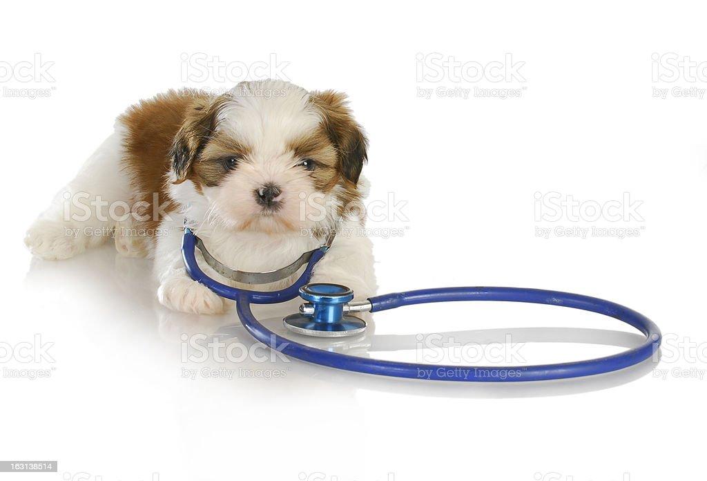 veterinary care royalty-free stock photo