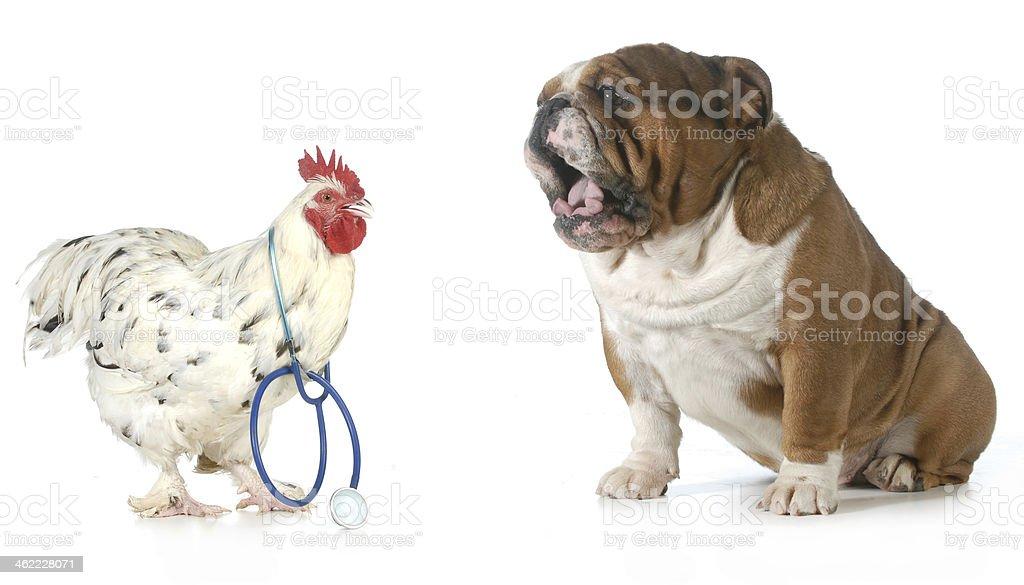 veterinary care stock photo
