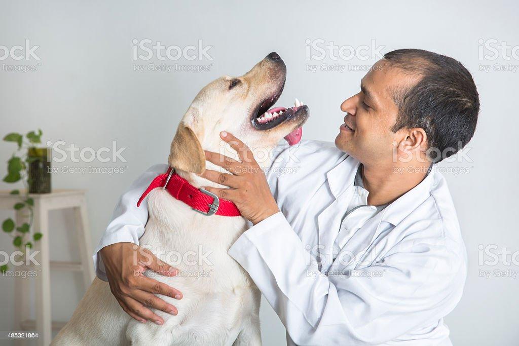 Veterinary Doctor makes Yellow Labrador Retriever feel comfortable stock photo
