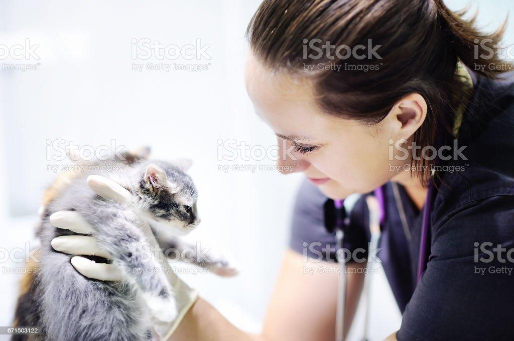 Veterinary doctor with cute kitten stock photo