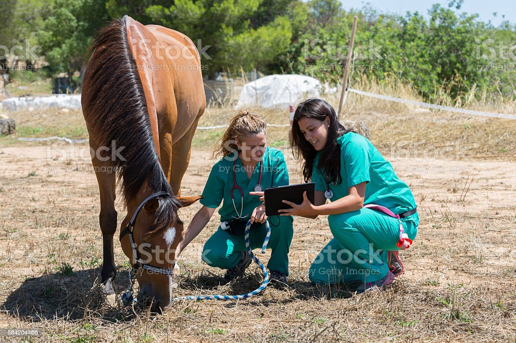 Veterinary horses on the farm stock photo