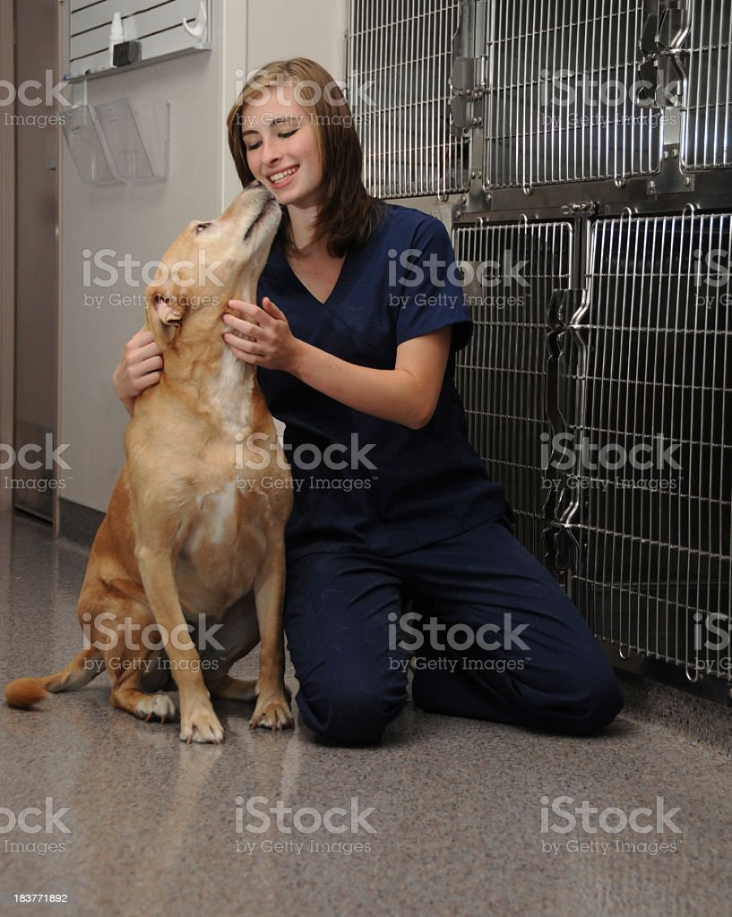 Veterinary nurse petting a dog outside of the kennels stock photo