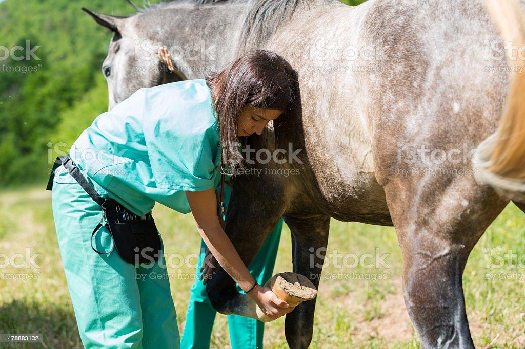 Veterinary on a farm stock photo