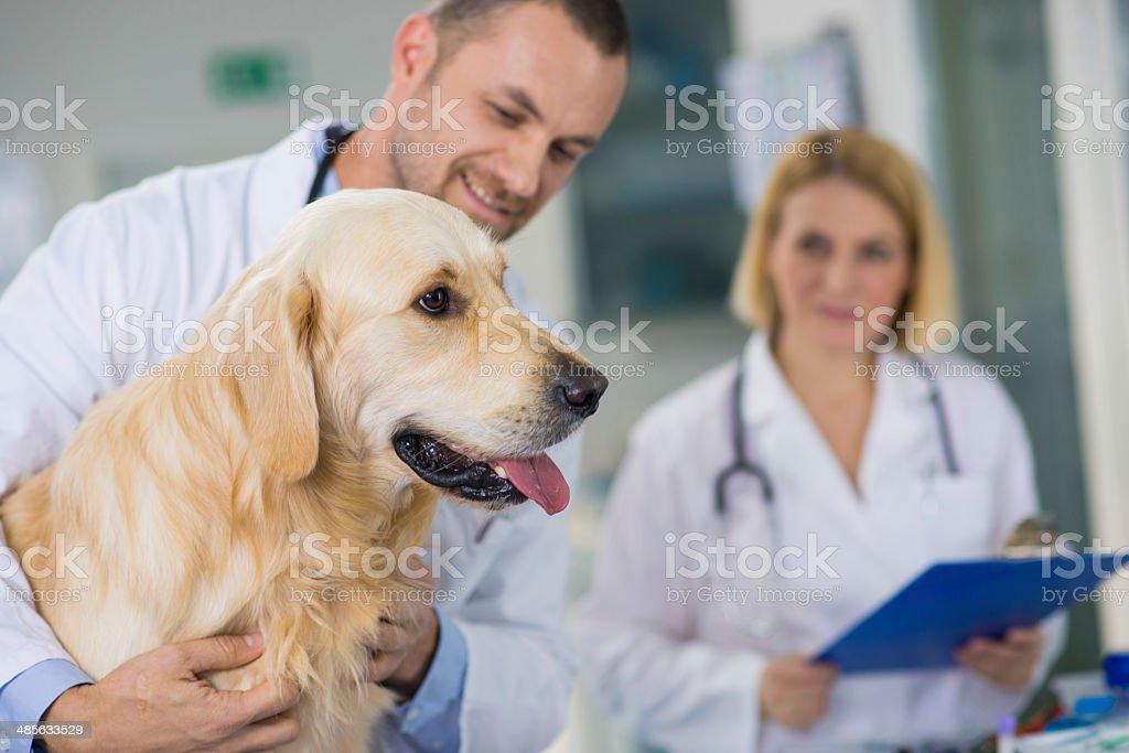 Veterinary Physicians Examining A Dog stock photo