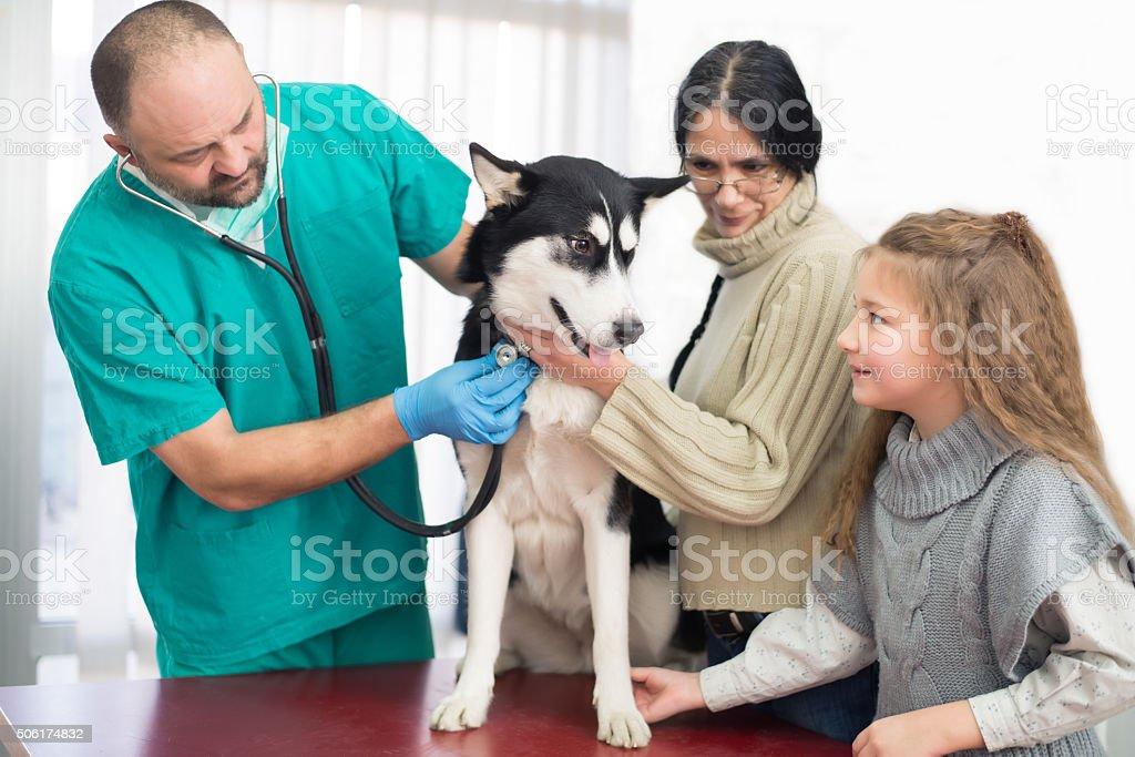 Veterinary stock photo